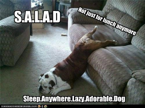 acronyms animals bulldogs dogs i has a hotdog lazy lunch salad sleeping