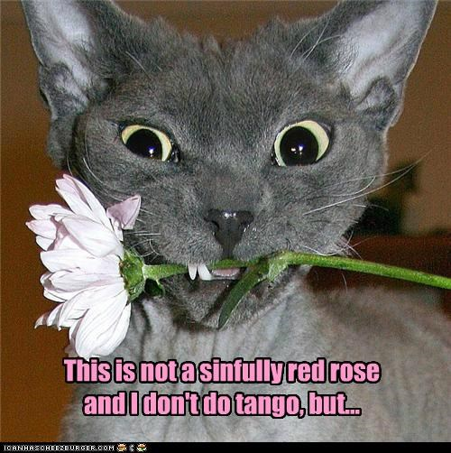 This is not a sinfully red rose and I don't do tango, but...