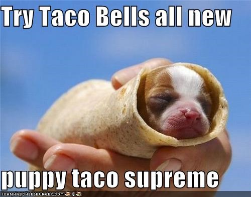 asleep awww burrito puppy puppy taco supreme sleeping taco whatbreed - 5145087232