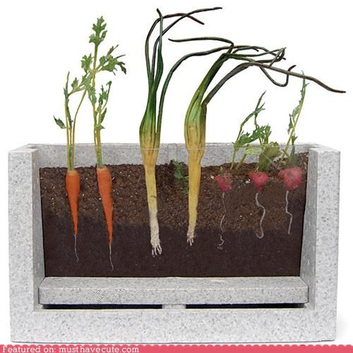 desktop educational garden plants roots vegetables