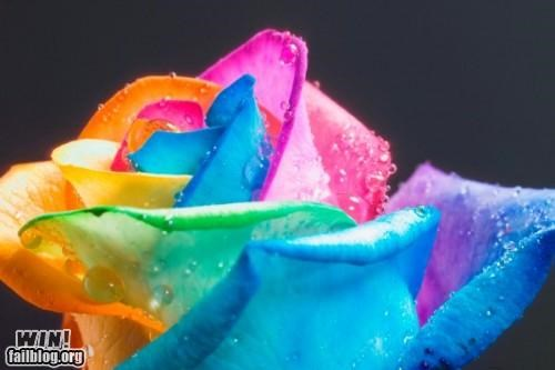 DIY hacked modification photography rainbow rose - 5145496576