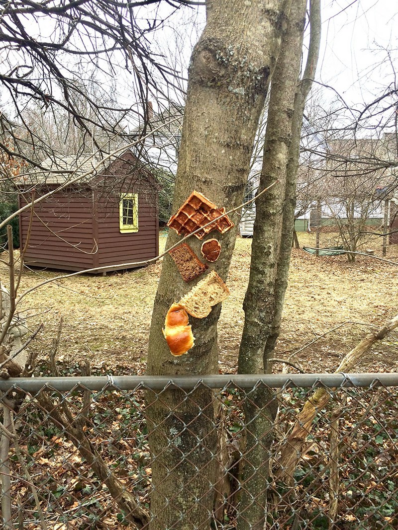 bread stapled to trees