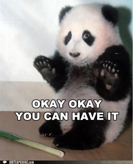 animals bamboo give up hands I Can Has Cheezburger panda bears panda paws - 5145798912