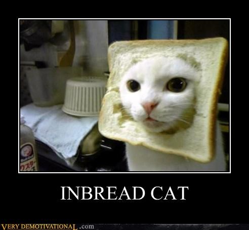 Funny meme of a cat that has his head stuck in a slick of bread, with a joke made in the caption that this cat is inbred.