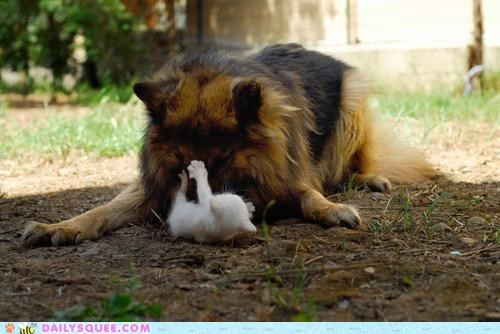 dogs Interspecies Love kitten never mind over play play time playing psyche wrestling