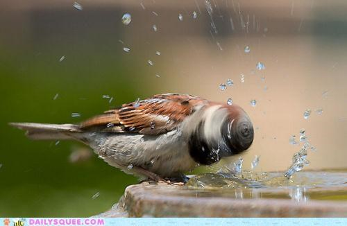 acting like animals bird drill drillbit drilling head high speed shaking spinning - 5146457088