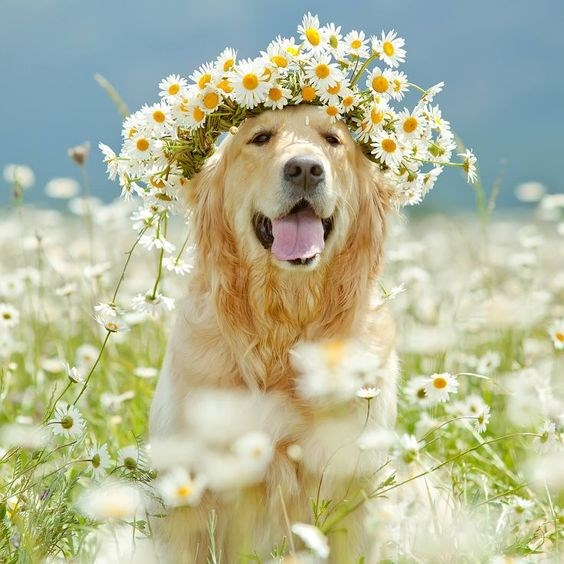 dogs in the spring