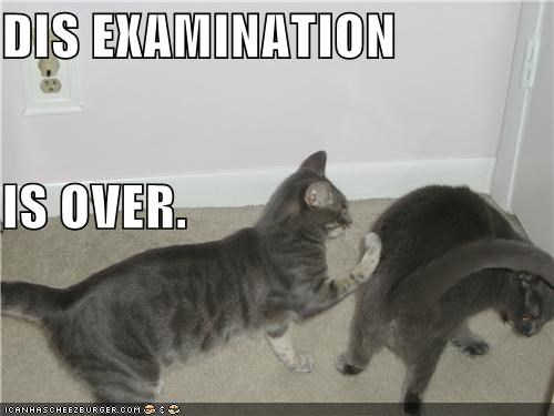 animals butts Cats doctors ew examination I Can Has Cheezburger