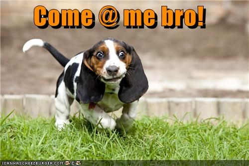 basset hound come at me bro funny face running - 5147097344