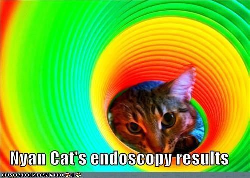 caption captioned cat colors endoscopy Nyan Cat rainbow results - 5147354112