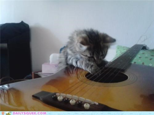 aspiring,attila csihar,cat,guitar,kitten,musician,playing,reader squees,rock,rockstar,void
