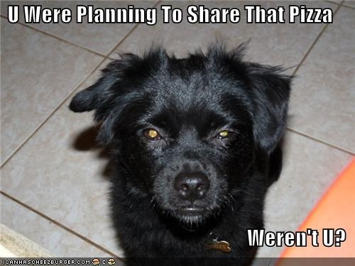 food glare mixed breed noms people food pizza share want whatbreed - 5148010752
