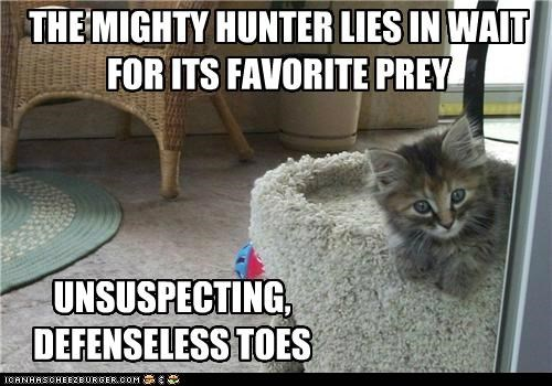 caption,captioned,cat,defenseless,favorite,hunter,kitten,lies,mighty,prey,toes,unsuspecting,wait