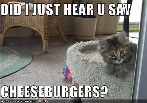 Cheezburger Image 5148669184