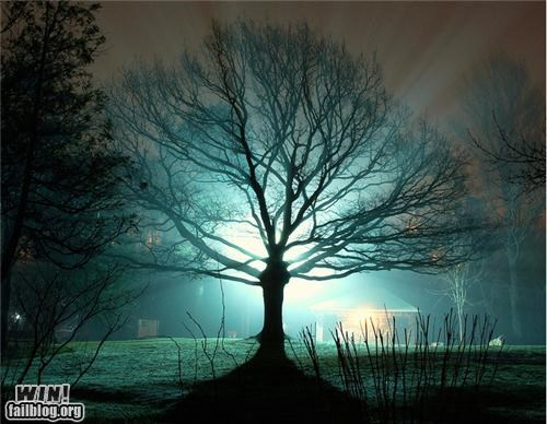 eerie ghost light night photography spooky tree