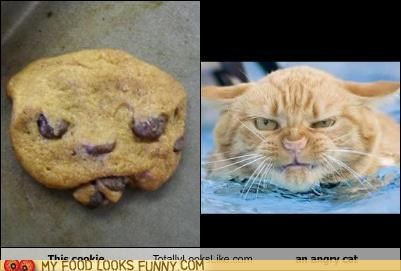 cat,cookies,look alikes,package,totally looks like