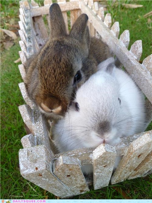 bunnies bunny cuddling happy bunday reader squees snuggling - 5149280256