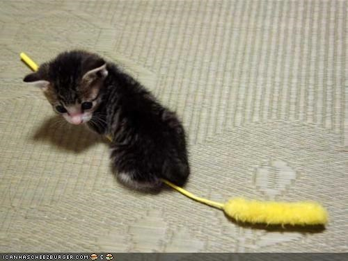 best of the week broom confused cyoot kitteh of teh day riding tiny witch - 5149768192