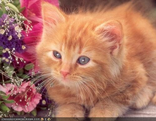 cute,cyoot kitteh of teh day,flowers,fuzzy,ginger