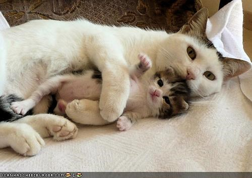 cyoot kitteh of teh day,kitten,mama,mom,newborn,protect,tiny,two cats