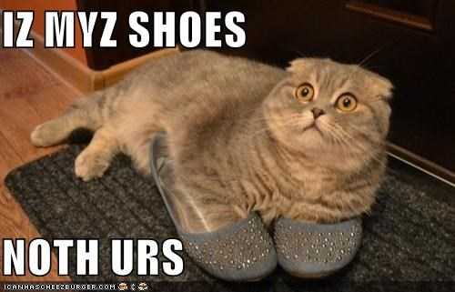 caption,captioned,cat,defensive,lolwut,my,not,protective,shoes,yours