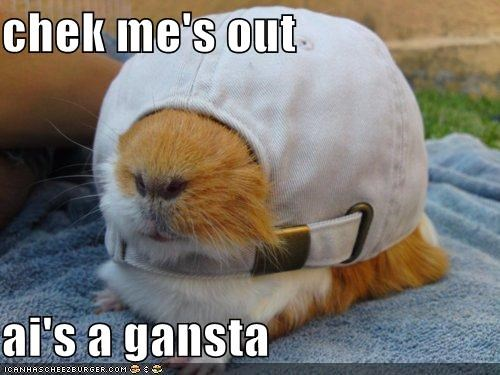 am backwards caption captioned check check out fit gangster guinea pig hat I lolwut me out wrong