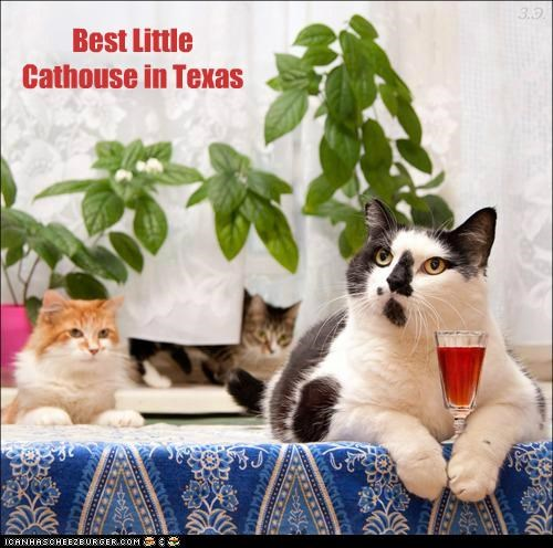 best caption captioned cat cathouse house little parody texas - 5150306560