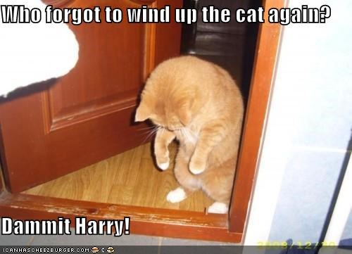 again caption captioned cat forgot question tabby who wind - 5150529280