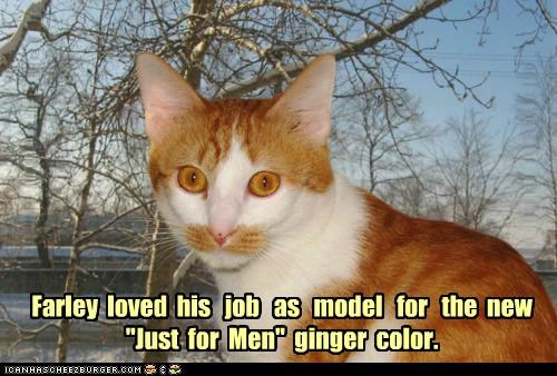Ad advertising caption captioned cat color ginger job love mens model mustache posing tabby