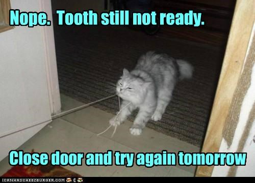 Nope. Tooth still not ready. Close door and try again tomorrow