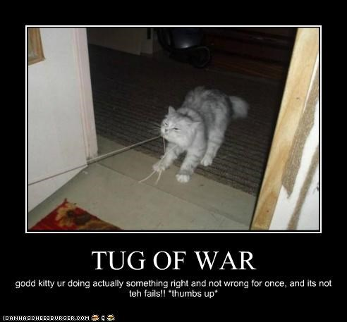 TUG OF WAR godd kitty ur doing actually something right and not wrong for once, and its not teh fails!! *thumbs up*