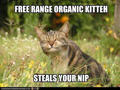 FREE RANGE ORGANIC KITTEH STEALS YOUR NIP