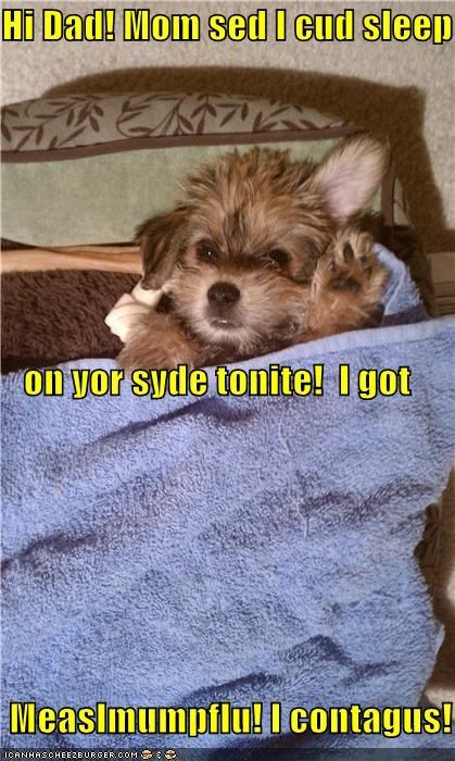 bed blanket contagious hi dad not feeling well puppy sick sleeping terrier towel whatbreed - 5151597824