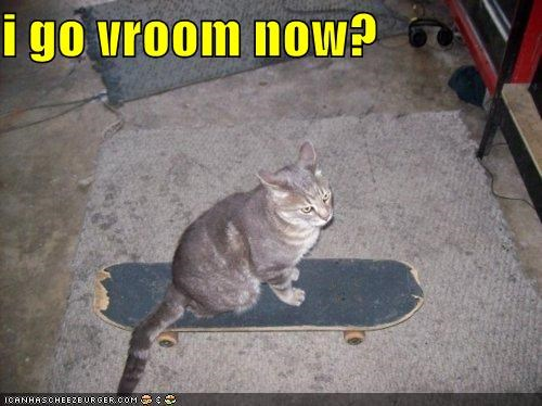 animals,Cats,exciting,I Can Has Cheezburger,rides,skateboards,vroom