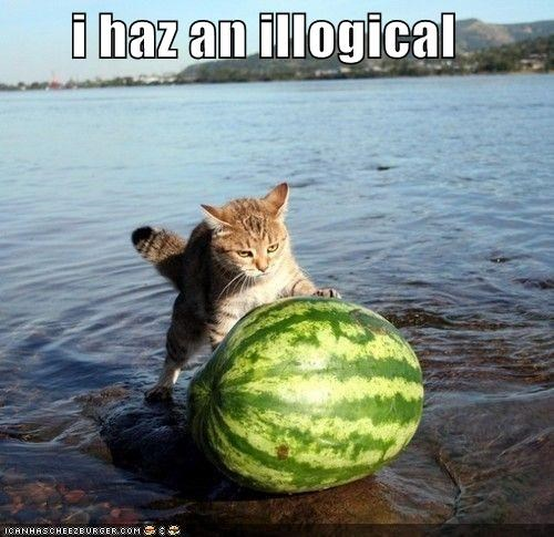 cat,I Can Has Cheezburger,i-have-no-idea-whats-going-on,illogical,push,water,watermelon,what,wtf