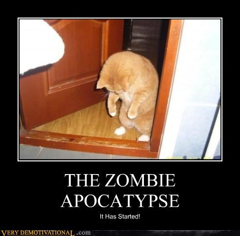 animals,apocalypse,cat,hilarious,zombie