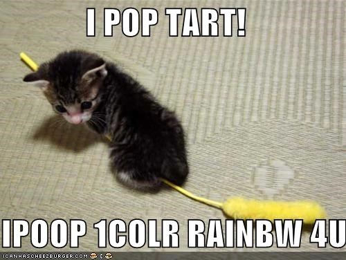 cats animals dumb I Can Has Cheezburger nyan Nyan Cat pop tart rainbow - 5152834304