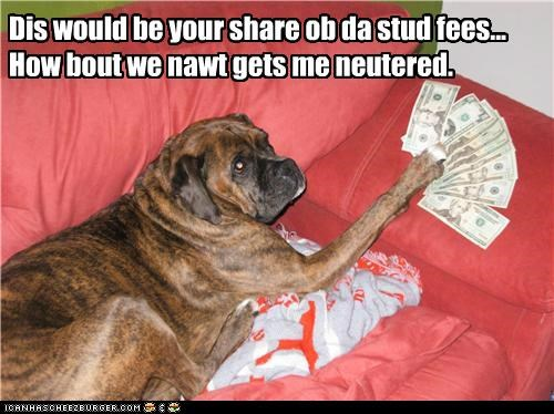 Dis would be your share ob da stud fees... How bout we nawt gets me neutered.