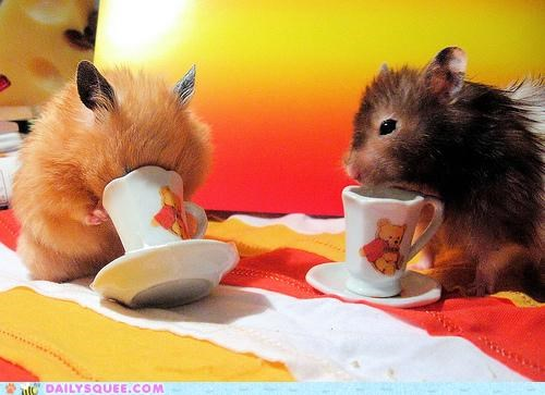 acting like animals cup D define drinking etiquette etiquette school FAIL grade Hall of Fame hamster hamsters pass passed passing school speculating tea teacup - 5153532672