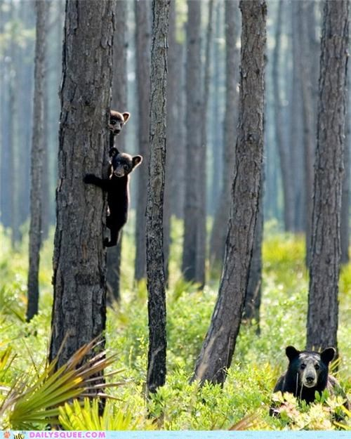 bear,bears,cub,cubs,style,time out,timeout,tree