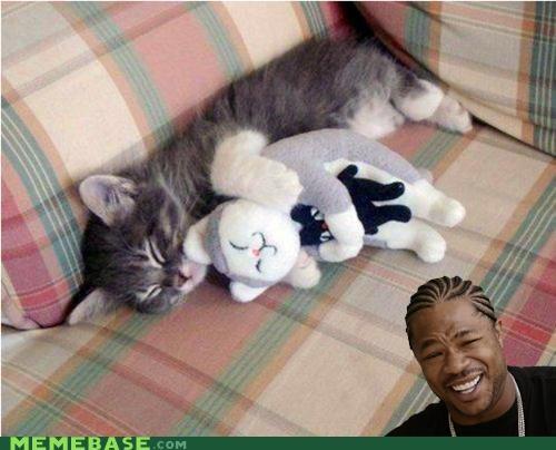 cat cute dawg squee yo dawg - 5153590016