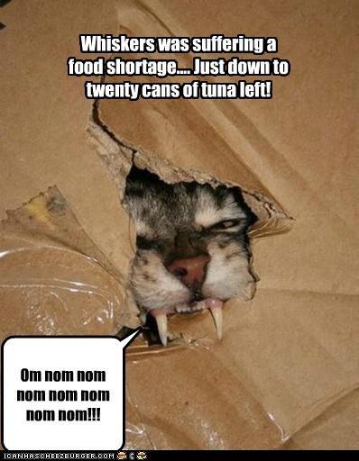 Whiskers was suffering a food shortage.... Just down to twenty cans of tuna left! Om nom nom nom nom nom nom nom!!!