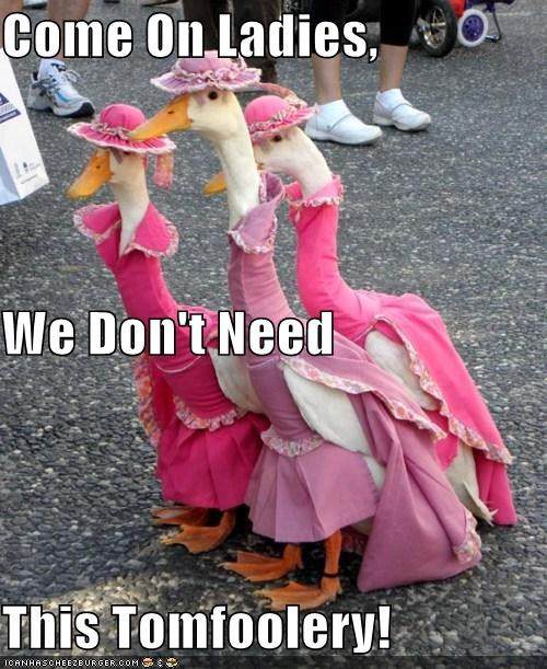 animals birds costume dressed up ducks fancy geese I Can Has Cheezburger ladies tomfoolery - 5154578688