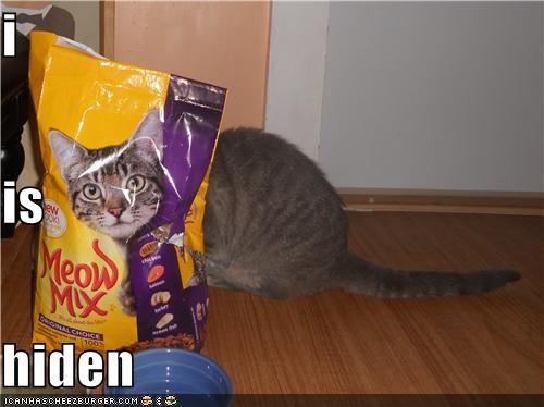 Cheezburger Image 5154876416