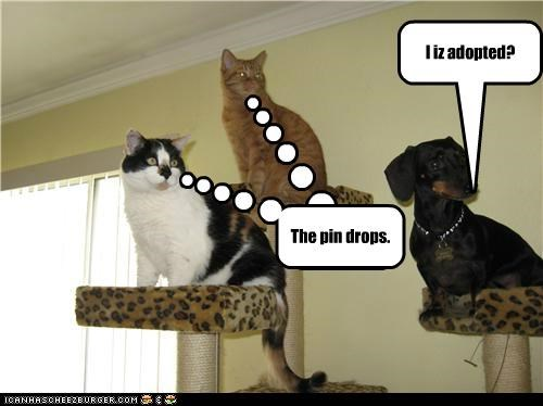 I iz adopted? Cleverness Here The pin drops.