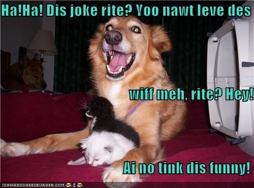 cat funny golden retriever joke kitten mixed breed smiles