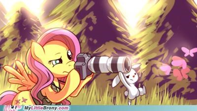 animals art fluttershy love pictures shutter shy - 5156022272