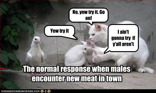 No, yew try it. Go on! Yew try it I ain't gonna try if y'all aren't The normal response when males encounter new meat in town