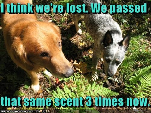 I think we're lost. We passed that same scent 3 times now.
