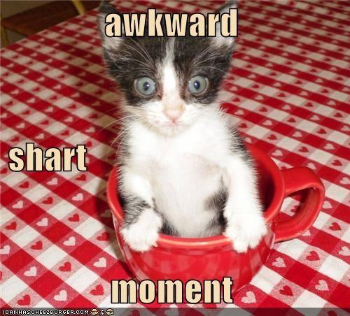 animals awkard Cats I Can Has Cheezburger mugs shart sharted - 5156727296
